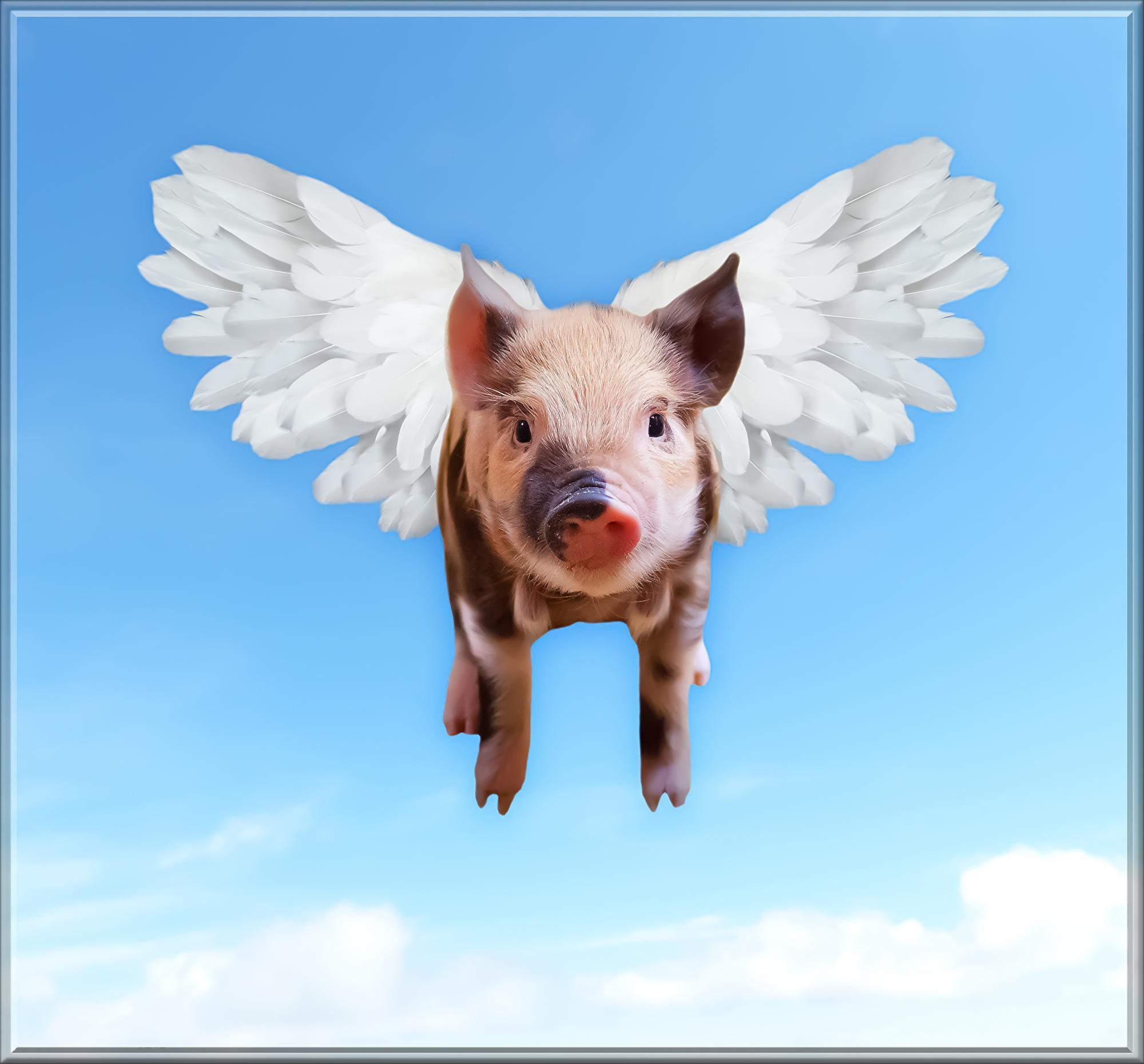 pigs-1520968.jpg